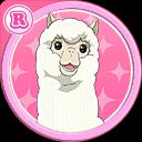 #83 Alpaca R